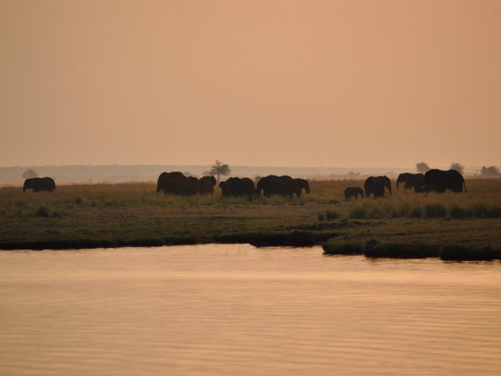 Chobe sunset cruise 9